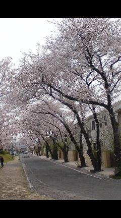 桜路のさくら