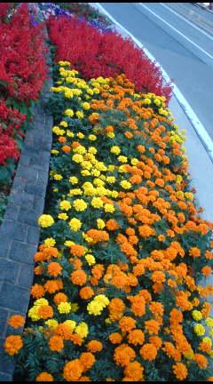夕暮れの花壇