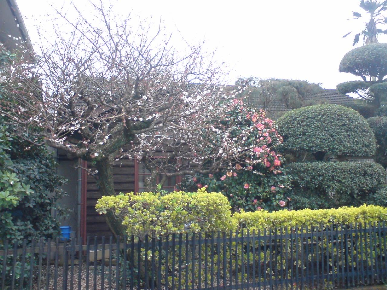 肥後椿と梅