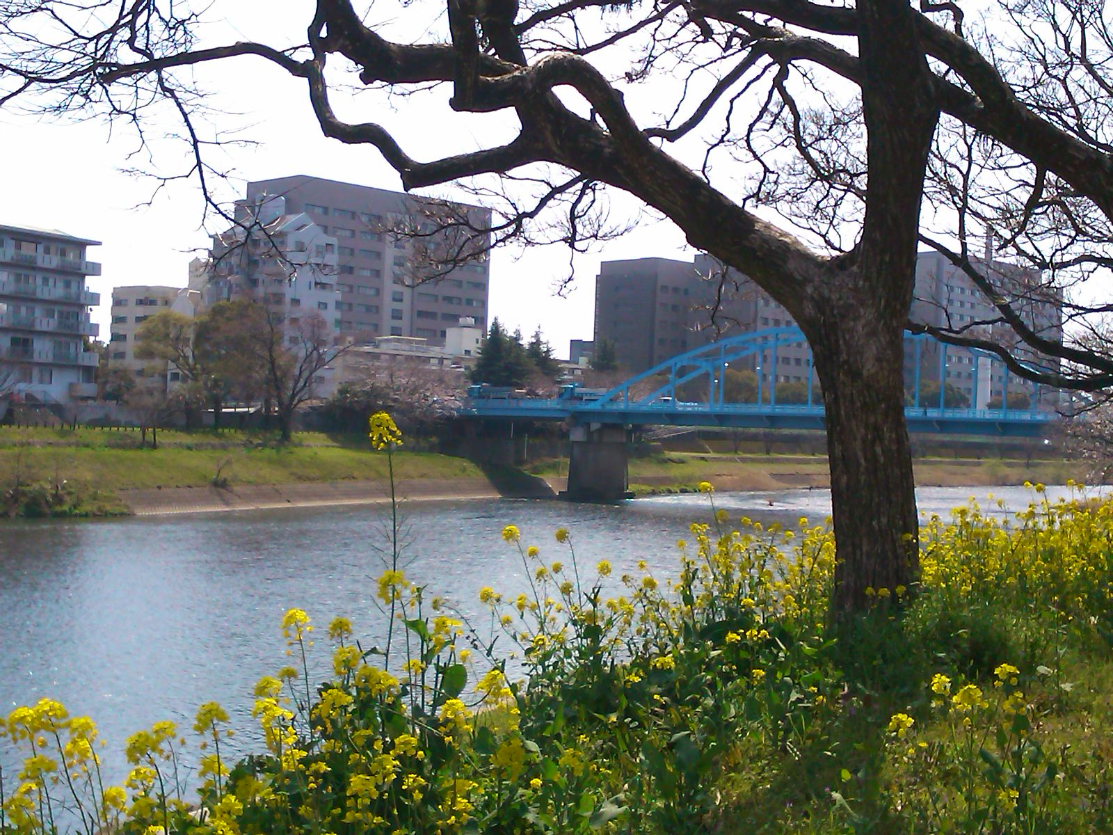 白川右岸より銀座橋を望む