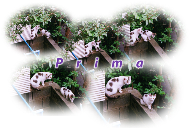 Primaw